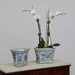 20th Century Blue and White Chinese Porcelain Planter_InSitu